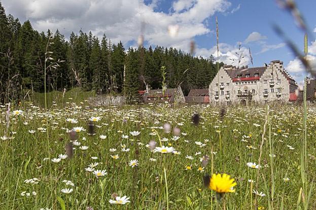 Blühende Sommerwiese vor dem Hotel