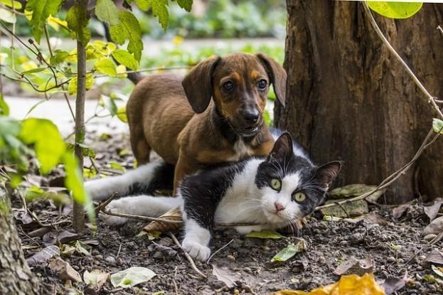 Unsere liebsten Haustiere