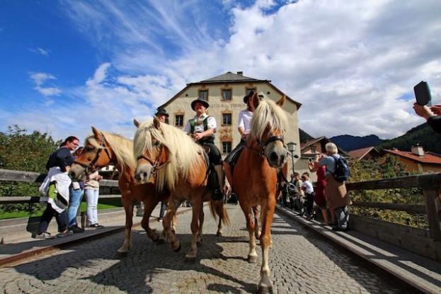 Almabtrieb im Tiroler Oberland