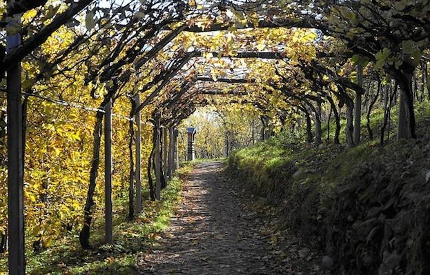 Lauschige Plätzchen auf den Weinwegen