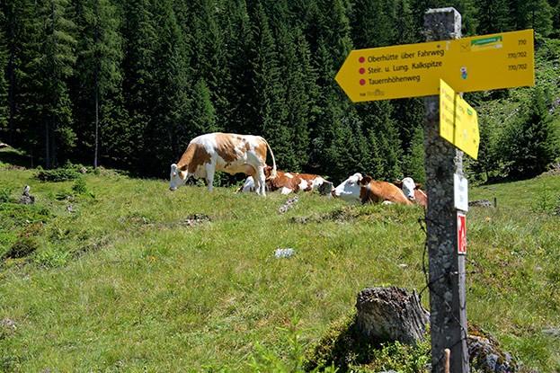 Weg zur Oberhütte