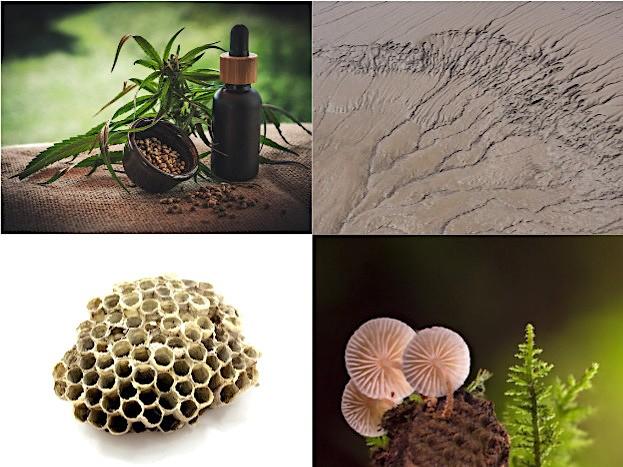 Cannabis, Heilerde, Propolis und Pilze