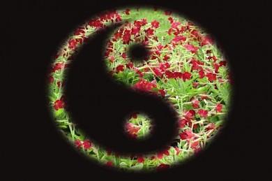 Yin und Yang bilden die Grundlagen der TCM - ©Pixabay_kirsten82