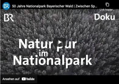 Nationalpark Bayerischer Wald - Bayerischer Rundfunk