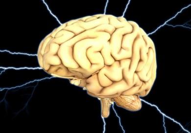 Wunderwerk Gehirn