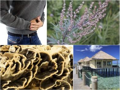 Reisekrankheit, Beifuß, Vitalpilz Coriolis, Tropen (von links oben nach rechts unten) - ©MykoTroph (1), Pixabay (3)