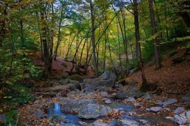 Wald in den Ardennen - ©Pixabay