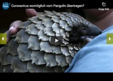 Löste das Pangolin den Coronavirus aus? - euronews