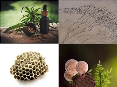 Cannabis, Heilerde, Propolis und Pilze  - ©Pixabay (4)