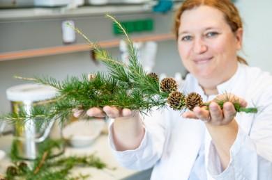 Dr. Melanie Ricke-Hoch in einem Labor der Abteilung für Molekulare Kardiologie mit einem Lärchenzweig. - ©Karin Kaiser / MHH