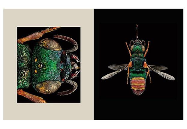 Bücher Portraits – Die Schönheit der Insekten-©Levon Biss/Frederking & Thaler