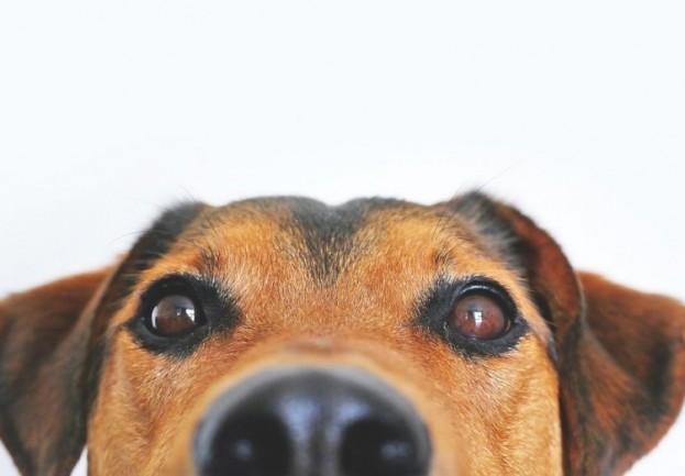 Hundenasen erriechen fast alles