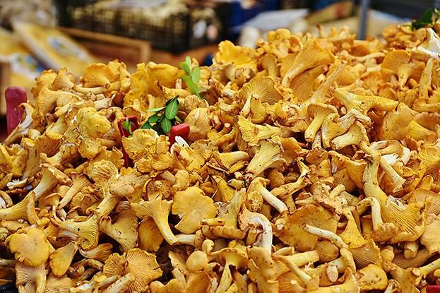 Essbar: Eierschwammerl, Pfifferlinge