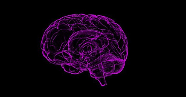 Gehirn - wird klug durch Fasten