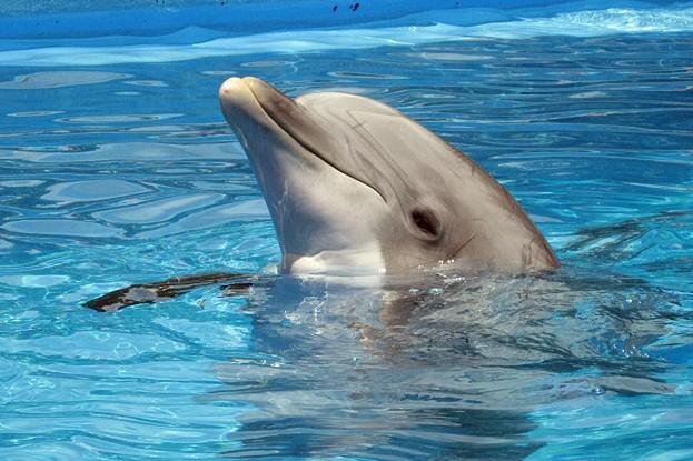 Rettet die Adria-Delfine