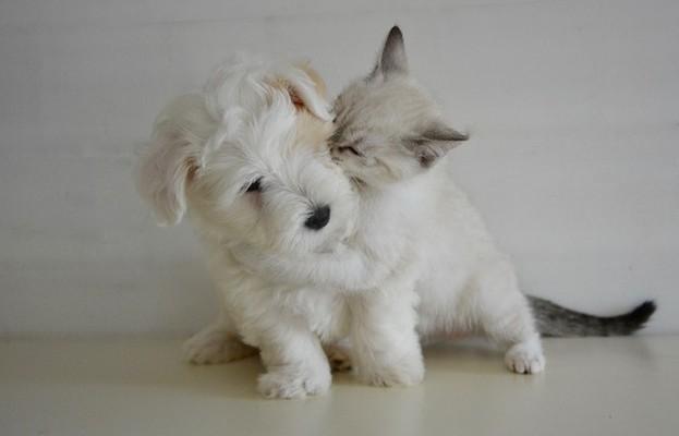 Haustiere fördern zwischenmenschliche Beziehungen!