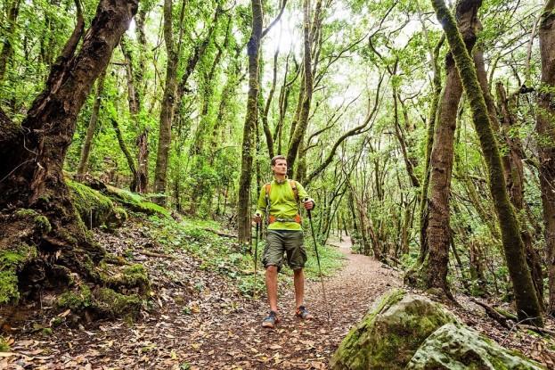 Wandern im Nationalpark Garajonay