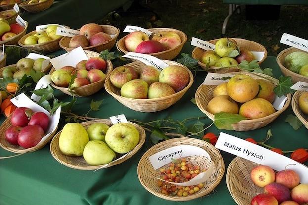 Nicht jede Apfelsorte eignet sich zur Lagerung