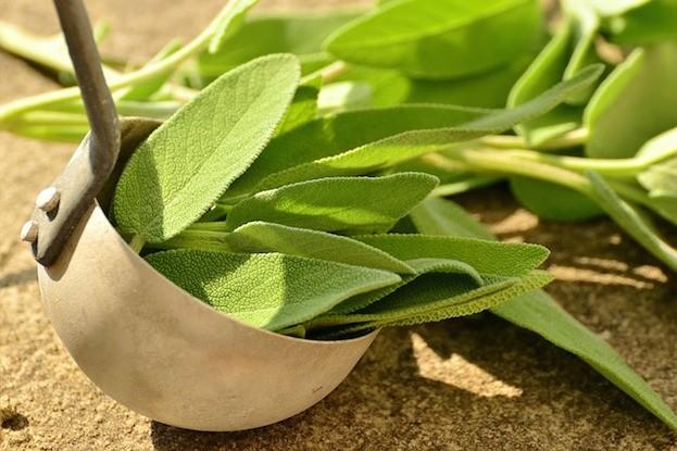 Salbei duftet aromatisch