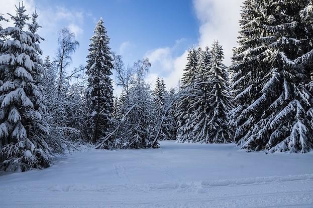 Geheimnisvoller Thüringer Wald