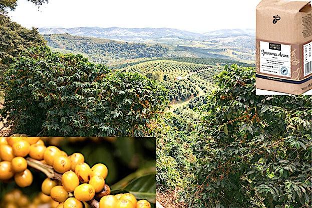 Blick von der Farm Ipanema Arara, gelbe Kaffeebohnen, Ipanema Arara Kaffee-Packung
