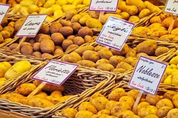 Kartoffeln gibt es zahllosen Sorten