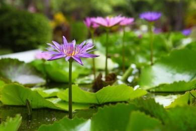 Flora im Banyan Tree Hotels & Resorts