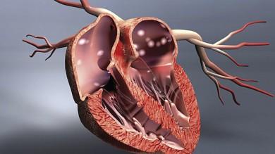Querschnitt vom Herz