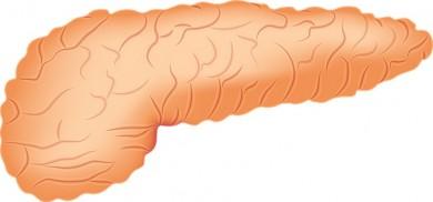 Bauchspeicheldrüse