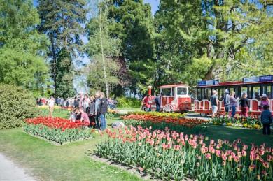 Tulpenfest in Morges am Genfer See - ©Ville de Morges