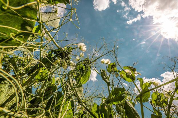 ©Union zur Förderung von Oel- und Proteinpflanzen e. V. (UFOP)